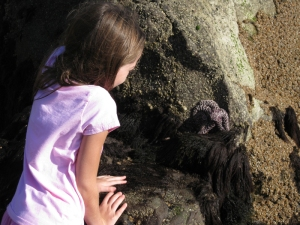 Our first trip to the beach involved tide pools. Starfish were the big hit.